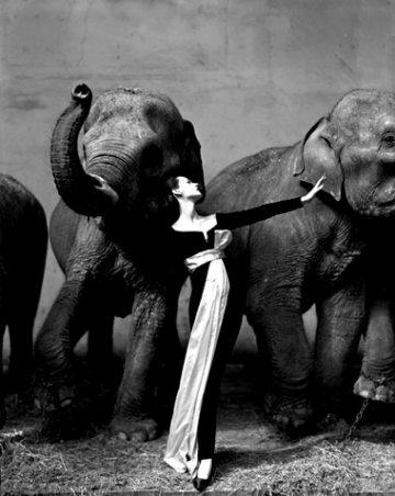 Richard Avedon7