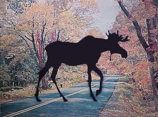 Charles Pachter7