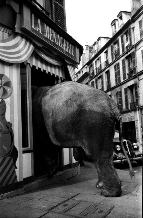 Georges Dambier8