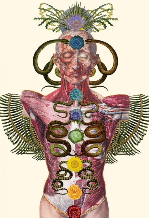 Travis_Bedel_anatomical_Collage_Art_Trend_Botanical_Studies_09-700x1022