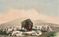 george-catlin-wounded-buffalo-surrounded-by-a-pack-of-wolves